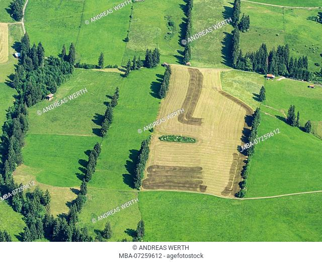Single sheds on meadows, fields with rows of trees, aerial view, slope of bavarian alps near Wertach, Allgäu, Allgaeu, Bavaria, Germany