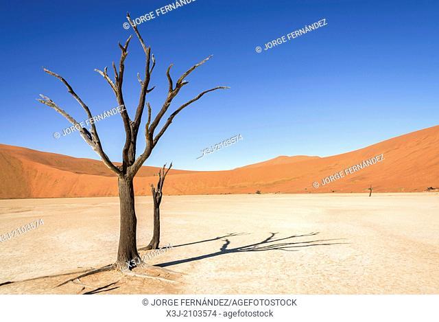 Dead trees of the Dead Vlei , Namib Naukluft National Park, Sossusvlei, Namibia, Africa