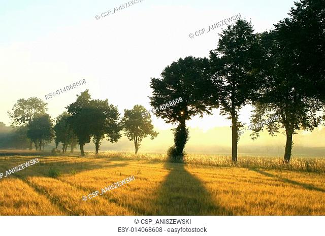 Trees in the countryside