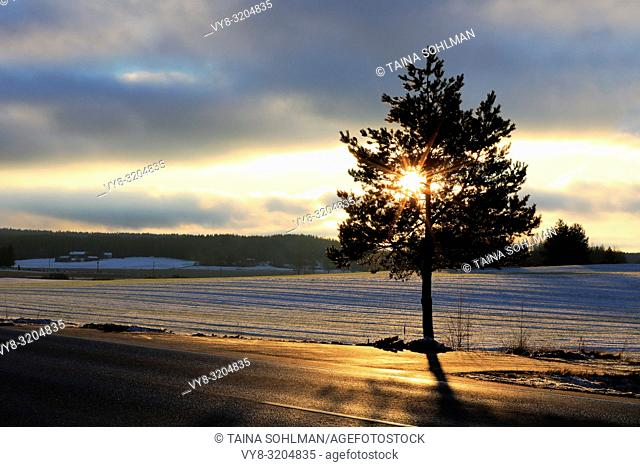 Winter sunset behind a small roadside tree forms a star within the branches. Salo, Finland