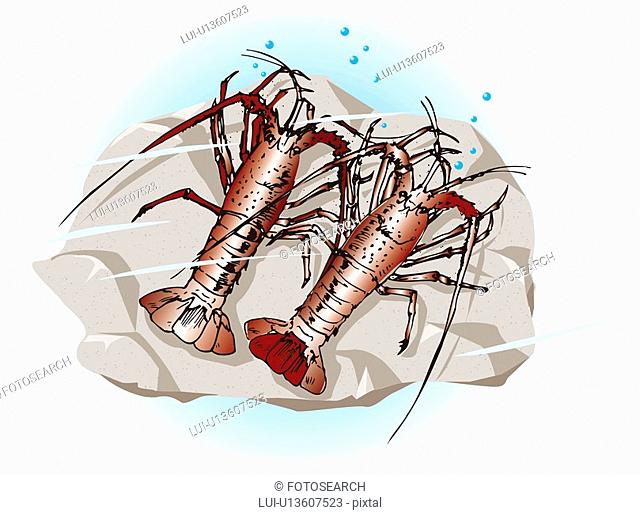 Two lobsters on the rock in water, high angle view