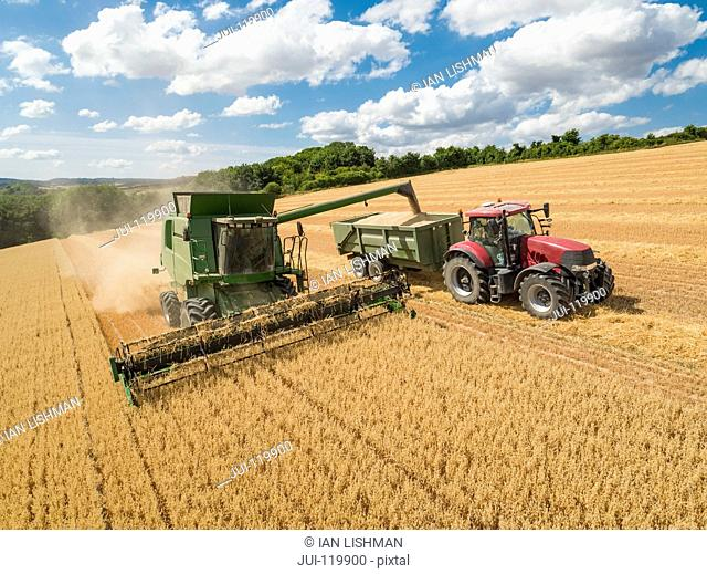 Harvest aerial of combine harvester cutting summer oats field crop with tractor trailer under blue sky on farm