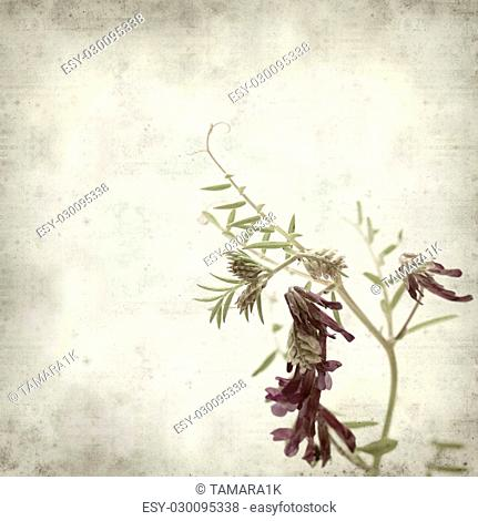 textured old paper background with fodder vetch