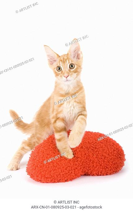 A kitten on a red cushion