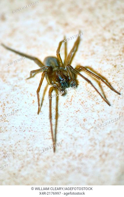 Overhead view of a spider on floor tiles