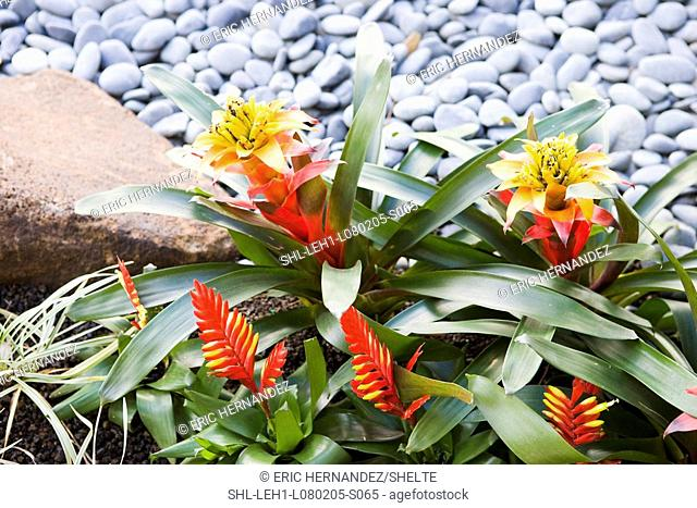 Tropical flowers in landscaping