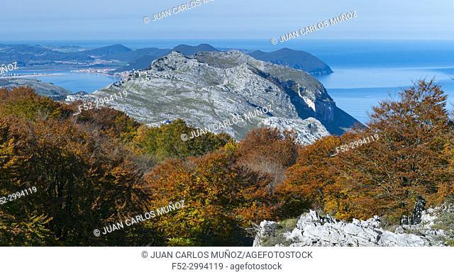 Beech forest in autumn at Cerredo Mountain, Cantabrian Sea, MONTAÑA ORIENTAL COSTERA MOC, Castro Urdiales, Cantabria, Spain, Europe