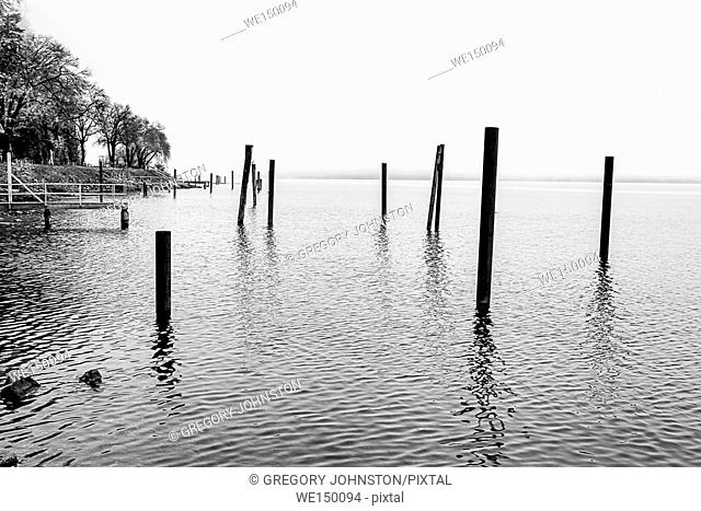 A B&W image of wood pilings in the water of Coeur d'Alene Lake in Idaho on a foggy day