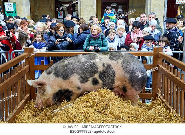 Sow, Feria de Santo Tomás, The feast of St. Thomas takes place on December 21. During this day San Sebastián is transformed into a rural market