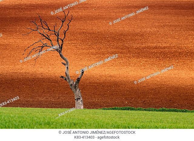 Death tree. Malaga Province. Andalucía. Spain