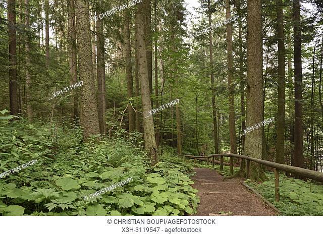 chemin dans la foret environnante de Zakopane, region Podhale, Massif des Tatras, Province Malopolska (Petite Pologne), Pologne