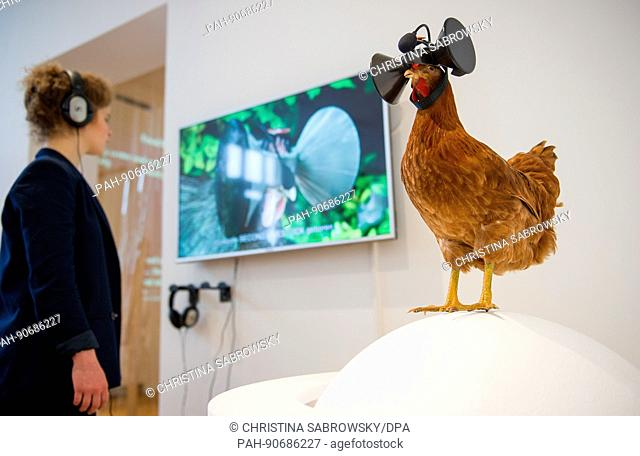 dpatop - A worker in the Arts and Crafts Museum looks at a video by artist Austin Stewart explaining the functioning of 3D glasses worn by chickens on display...