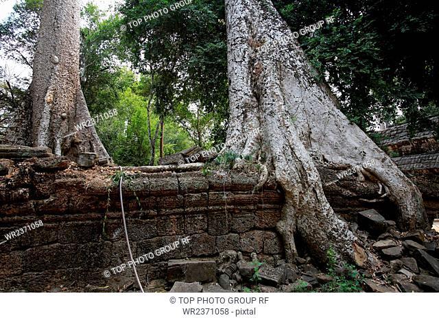 Southeast Asia Cambodia Ta Prohm