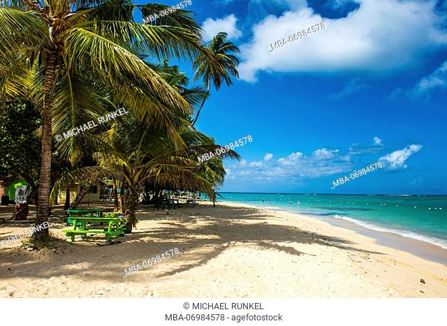 Sandy beach and palm trees of Pigeon Point, Tobago, Trinidad and Tobago, Caribbean