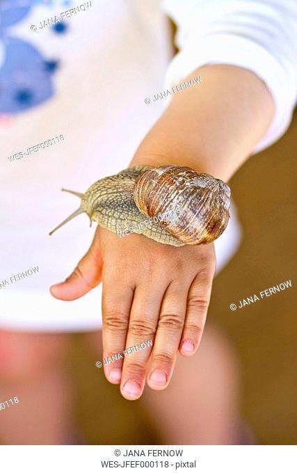 Germany, Kiel, Burgundy snail on hand of girl