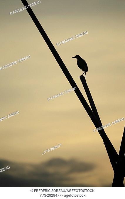 Silhouette of bird, Tempe lake, Sulawesi,Indonesia