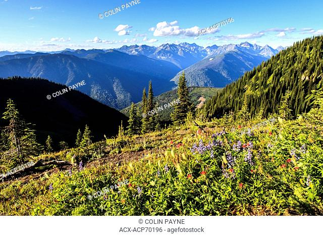 Wildflowers on Idaho Peak, with a view north on Goat Range Provincial Park, near New Denver and Kaslo, British Columbia
