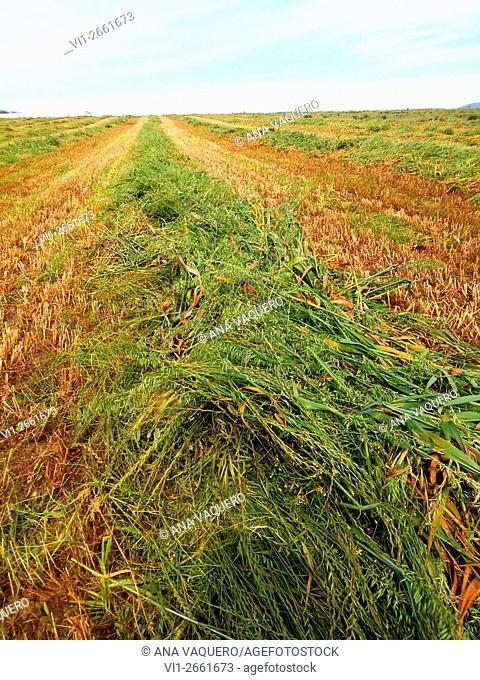 Farmlands, Miajadas, Caceres province, Extremadura, Spain