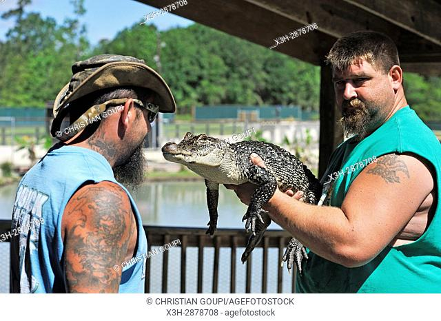 two men of Gator Country Wildlife Adventure Park showing a juvenile alligator, Beaumont, Texas, United States of America, North America