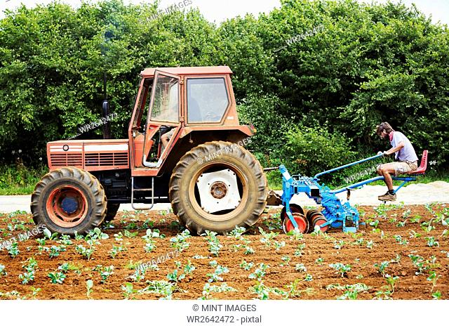 Two men driving a tractor pulling a cultivator weeding between rows of plants