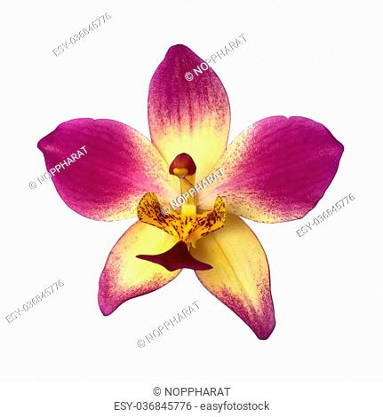 Ground orchids flower