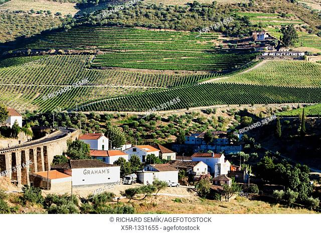 vineyars in Douro Valley at Tua, Portugal