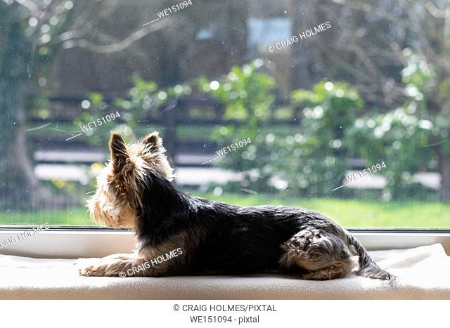 A dog waiting on a window ledge