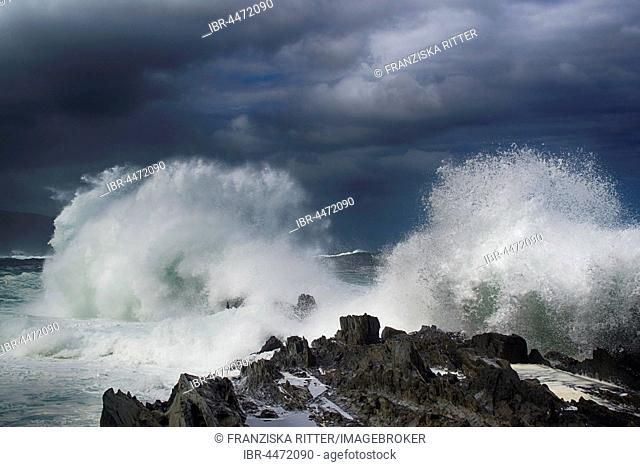 Wave, surf on rocky coast, Tsitsikamma National Park, South Africa