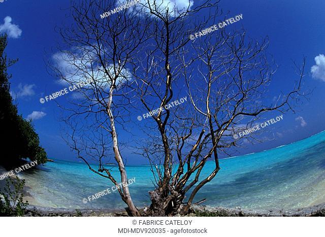 Maldives islands - North atoll