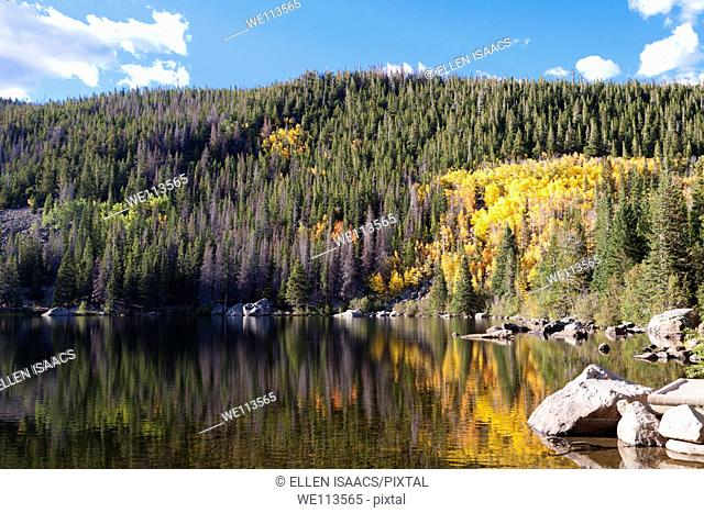 Glowing yellow leaves of aspen trees reflecting in water of Bear Lake in Rocky Mountain National Park in Colorado