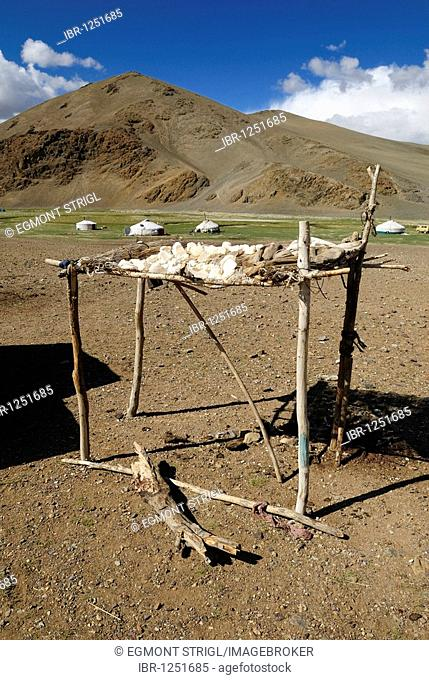 Yak cheese drying in the sun and nomad yurts in the Mongolian steppe, Aimak Bayan Ulgi, Altai Mountains, Mongolia, Asia