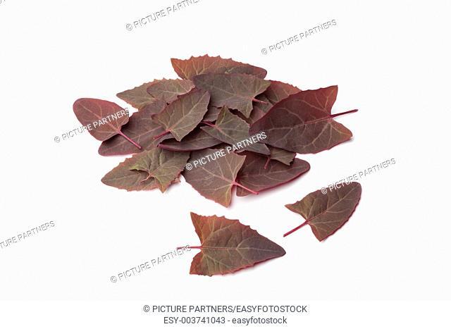 Fresh Garden Orache leaves on white background