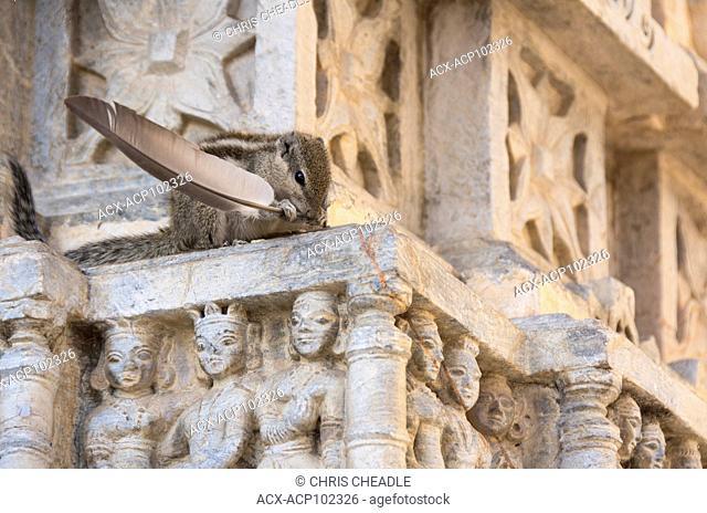 Indian palm squirrel or three-striped palm squirrel, Funambulus palmarum, and details of Jagdish Temple, Udaipur, Rajastan, India