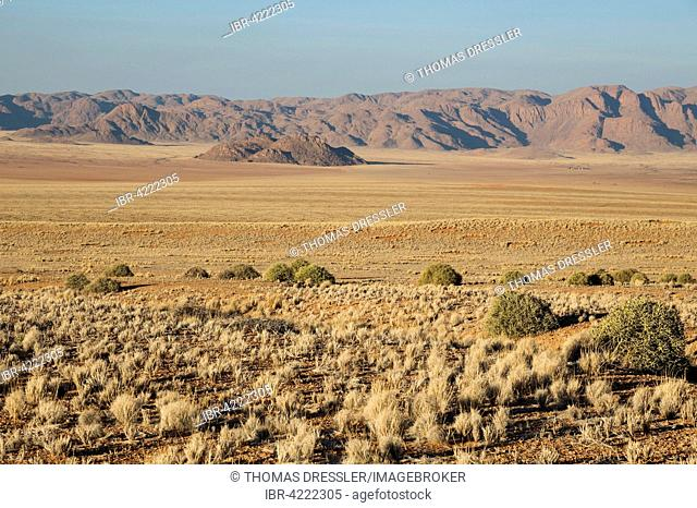 Grass covered desert plain at the edge of the Namib Desert, Fairy Circles, circular patches without any vegetation which according to some scientific studies...