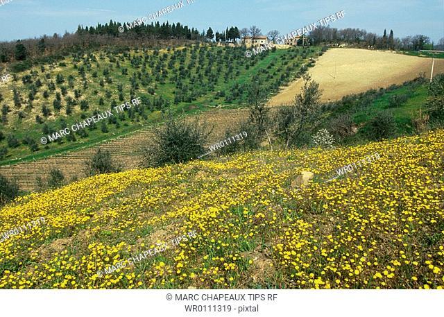 Italy, Tuscany, Val D'Orcia