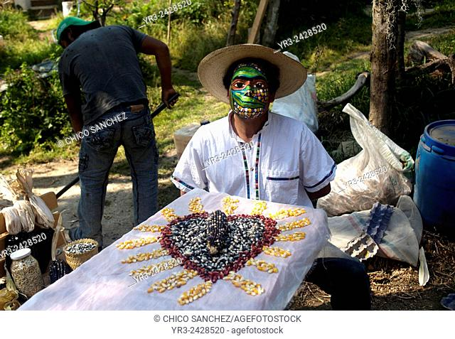 """Tomas Villanueva Buendia """"""""Tomaicito"""""""" who works to protect and rescue the original varieties of his nation's corn posses with a mask in his farm in..."""