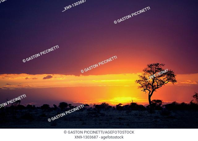 Sunset in the Kruger National Park, South Africa