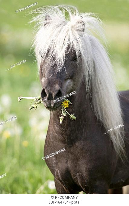 Classic Pony horse - munching