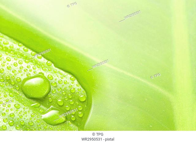 smooth water surface and new born green leaf in detail