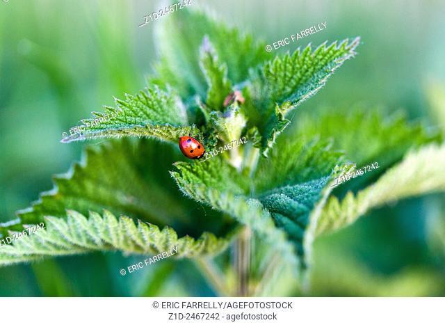 ladybird UK. Norfolk Broads