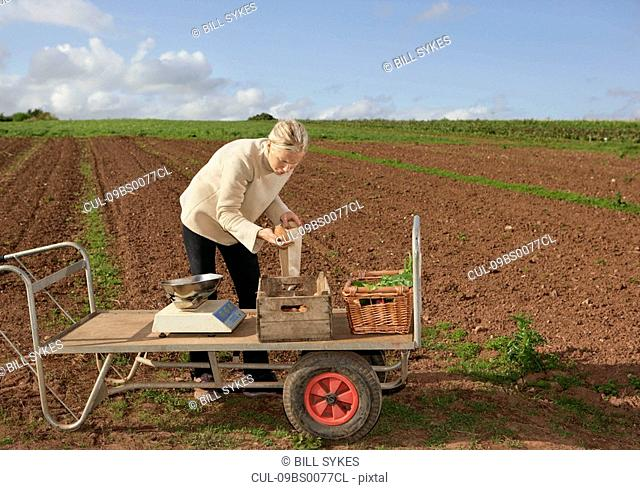 farm worker assesses crops