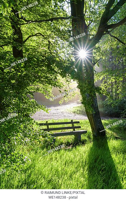 Bench in forest with sun, spring, Vielbrunn, Odenwald, Hesse, Germany