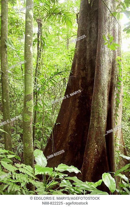 Selva nublada, Parque Nacional Henry Pittier, Venezuela