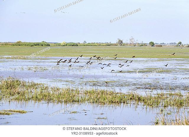 Birds at Thale Noi Waterfowl Reserve Park in Phatthalung, Thailand