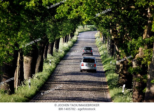 Country road, avenue, part of the Deutsche Alleenstrasse German Avenue Road, between Granitz and Putbus, Ruegen island, Mecklenburg-Western Pomerania, Germany