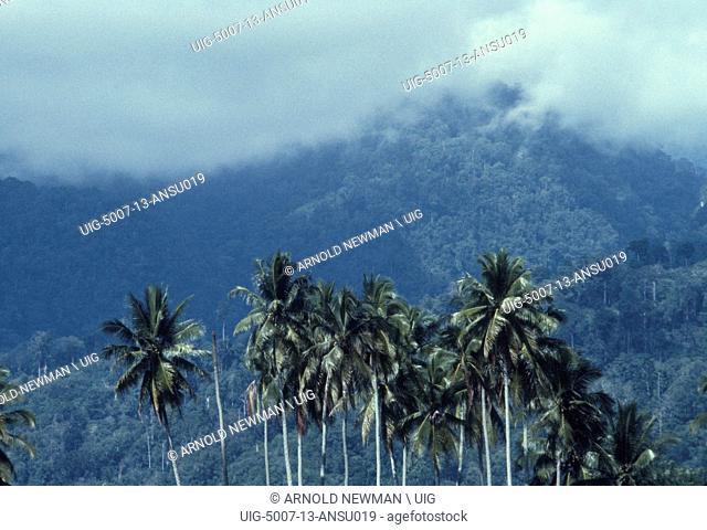 Gunung Leuser, where our new species of Rafflesia was found, 1983