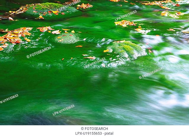 Floating Water With Several Autumn-colored Leaves on the Surface, High Angle View, Long Exposure, Akita Prefecture, Japan