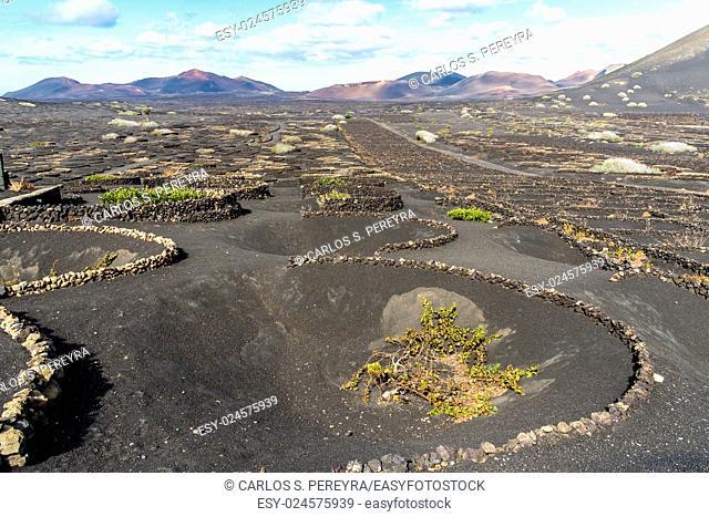 Vineyards in the Geria in Lanzarote, Canary Islands, Spain