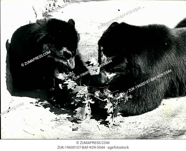 Feb. 26, 2012 - Getting the bear essentials - When it comes to feeding time, the animals at the Basle Zoo can?¢'Ǩ'Ñ¢t complain