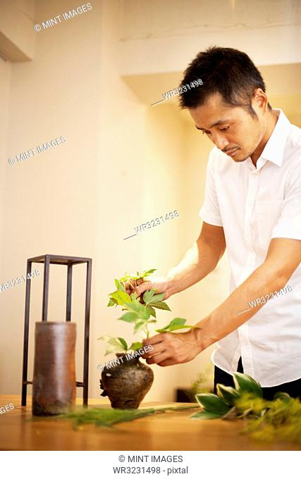 Japanese man working in a flower gallery, working on Ikebana arrangement